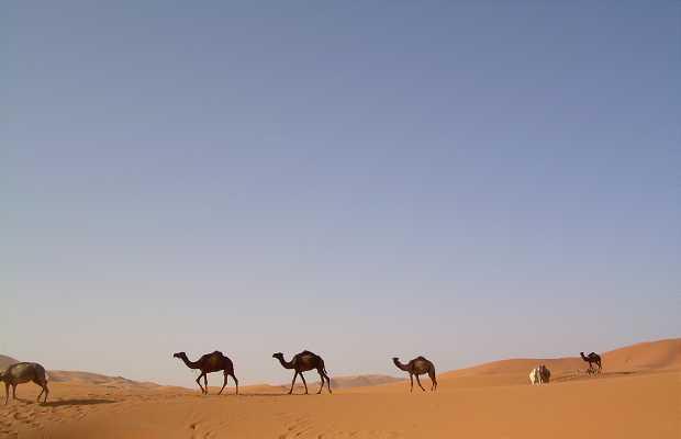 Haimas du désert