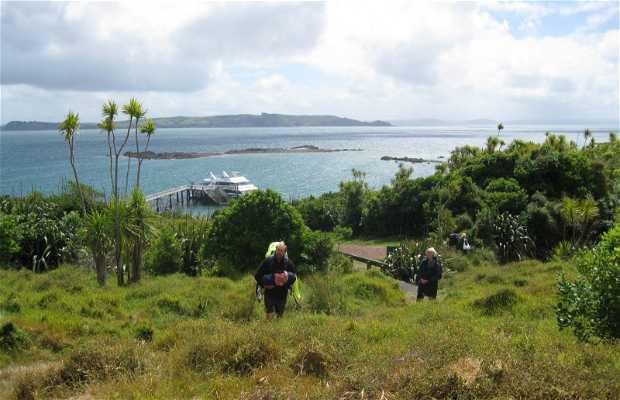 Ilha de Tiritiri Matangi