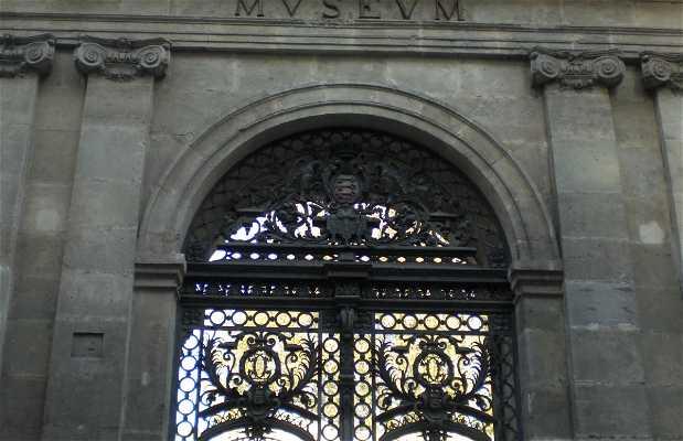 Museo Calvet