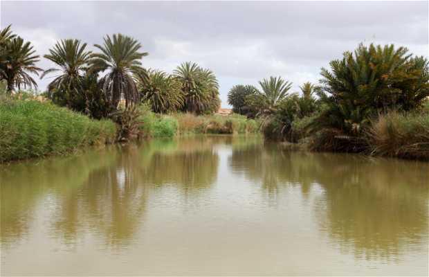 Sources de l'oasis de Tighmert