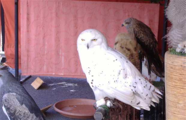Exhibición Aves de Cetreria