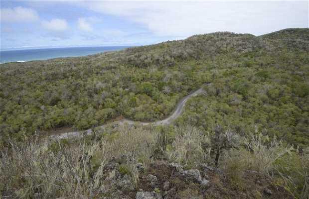Mirador Cerro Orchilla