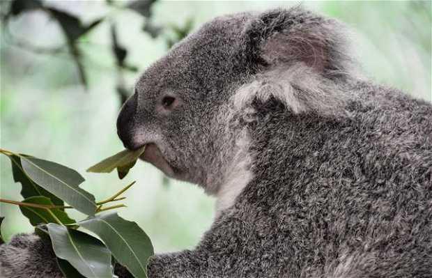 Lone Pine Koala Sanctury