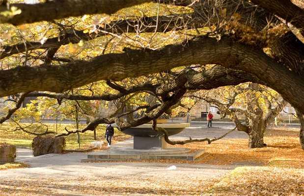 Parque Dienzenhofevory Sady