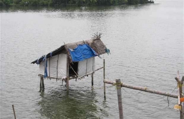 Chinese Fishing en Cherai