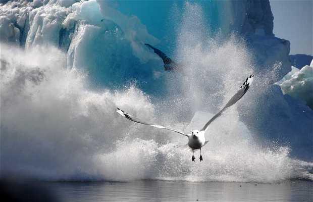 Glacier de Sawyer