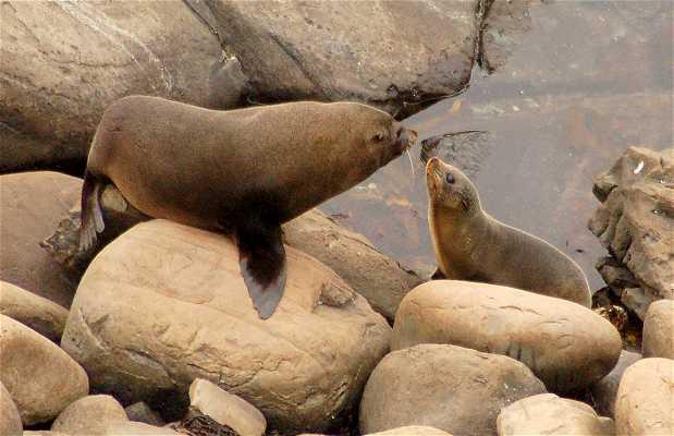Colonia de focas de Admirals Arch