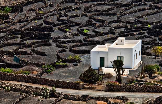 Ruta del vino por la geria en la geria 2 opiniones y 1 fotos for Fuera de ruta opiniones