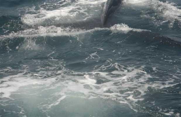La gira de ballenas
