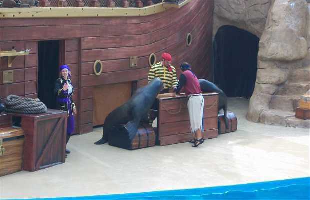 Sea Lion High