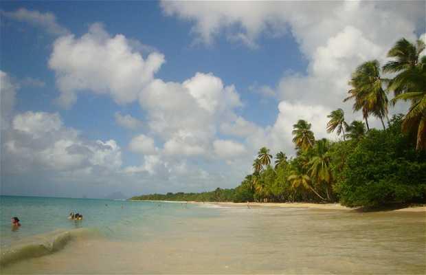 Playa de Salines