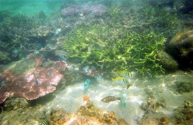 Fondos marinos de la isla Tioman
