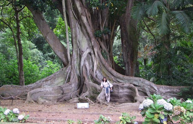Jardín Botánico José do Canto