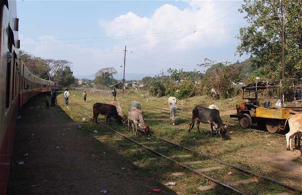 Train de Hsipaw à PyinUliwo