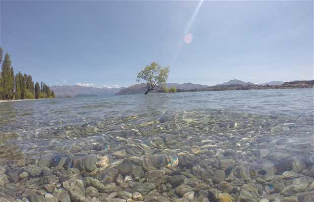 Tree lake Wanaka