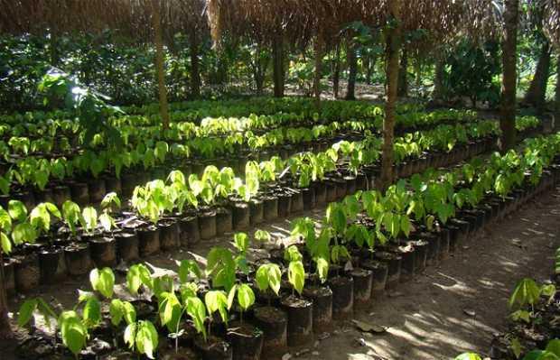 Hacienda Cacaotera Jesús María