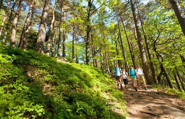 Palatine Forest