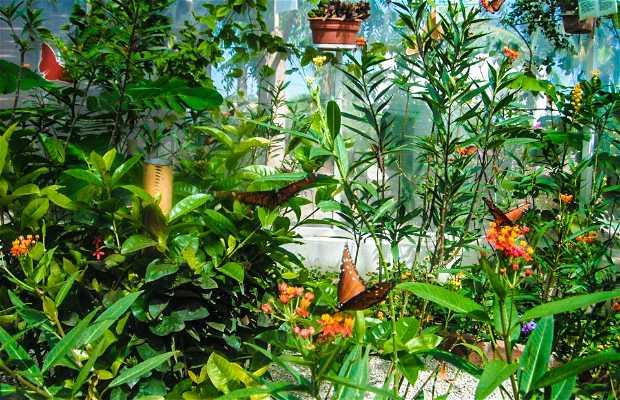 Sia Tikuva Butterfly Farm