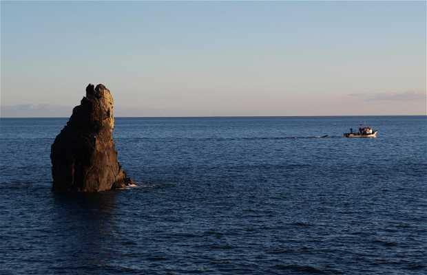 Gorgulho Island
