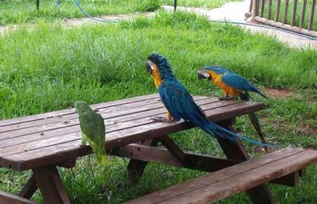 Centro de Aves Rapaces