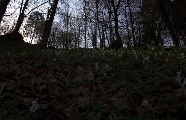 Bosque Drio le Rive