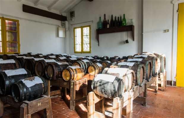 Azienda Agricola Rossi Barattini