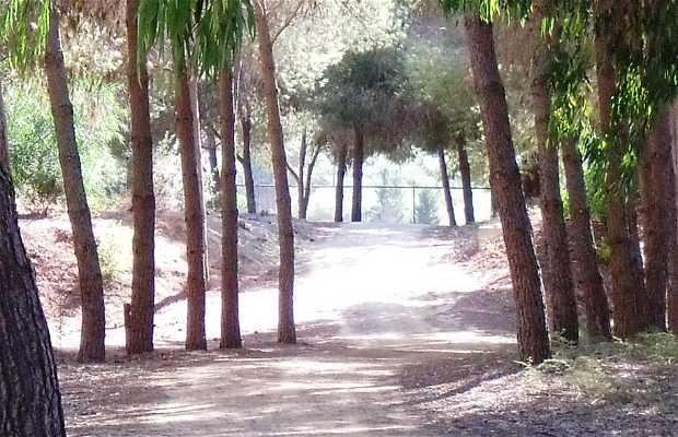 Aglantzia Forest Reserve