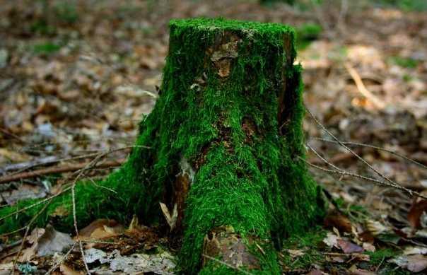 Il bosco di Ginevra
