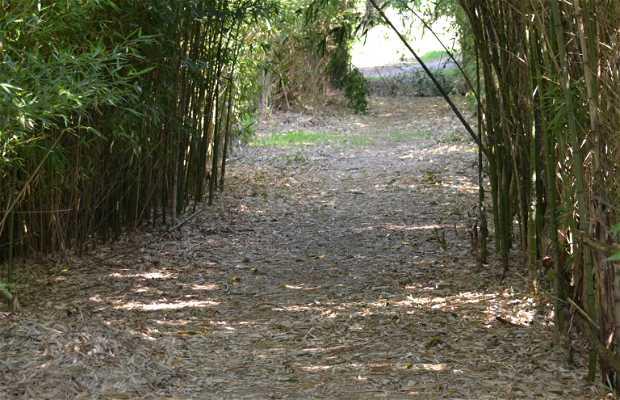 Bosque de Paliano