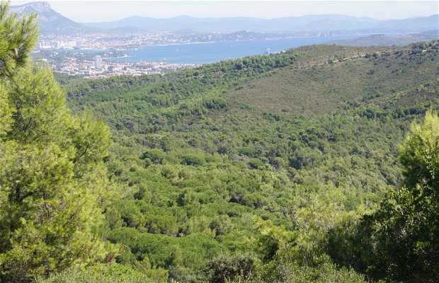 Bosque de Cap Sicié