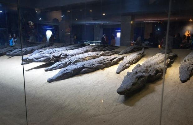 Museo del Cocodrilo