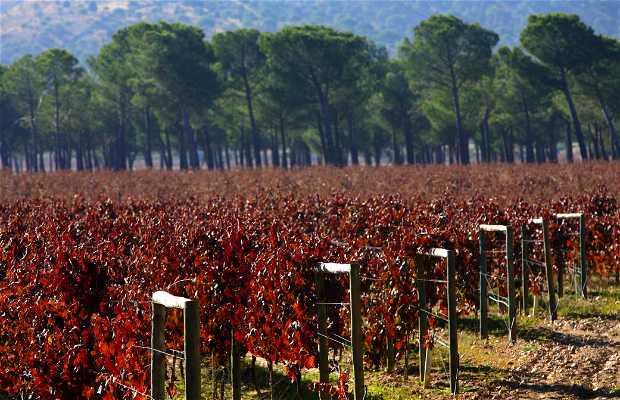 Enoturismo en Ribera del Duero