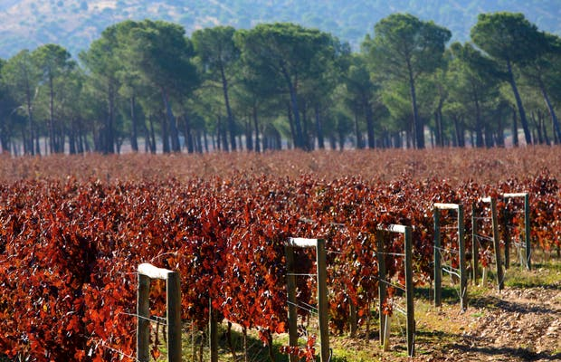 Wine in Ribera del Duero