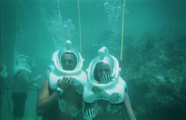 Underwater Activities in the Riviera Maya