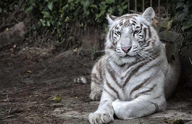 Zoo di Santillana del Mar