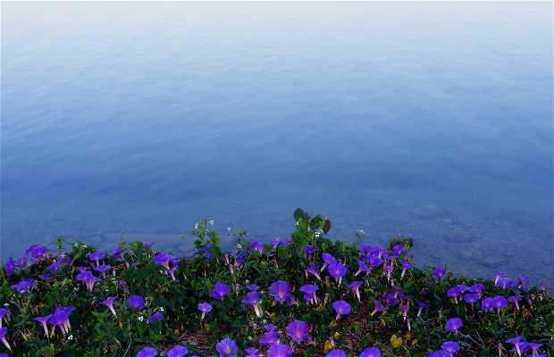 L'île de Flores
