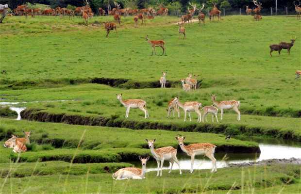 Pampas Safari de Gravataí