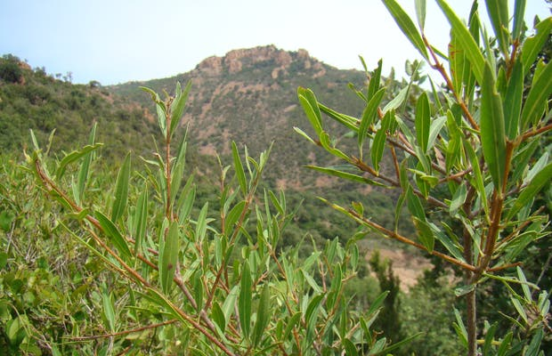 The Massif of Estérel