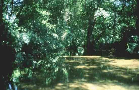 Rivera del Hueznar