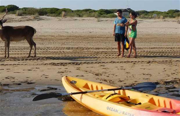 Kayaking in Doñana