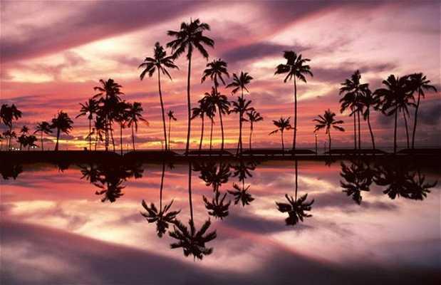 Spiaggia di Waikiki