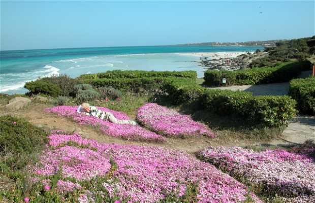 Praia La Pelosa
