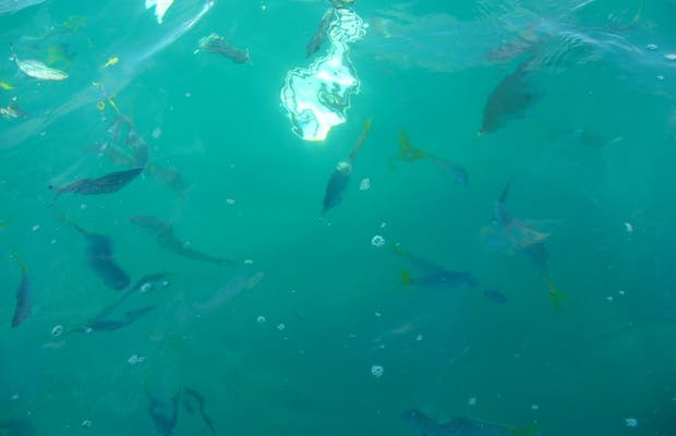 Diving in the Great Barrier Reef