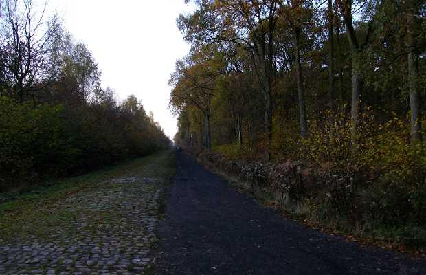 Raismes Forest