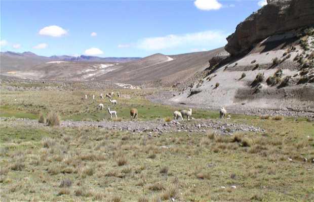 Reserva de Pampas Cañahuas