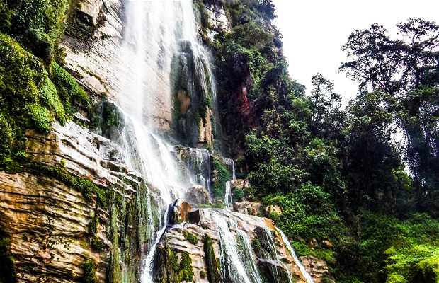Bosque de Cataratas Gigantes