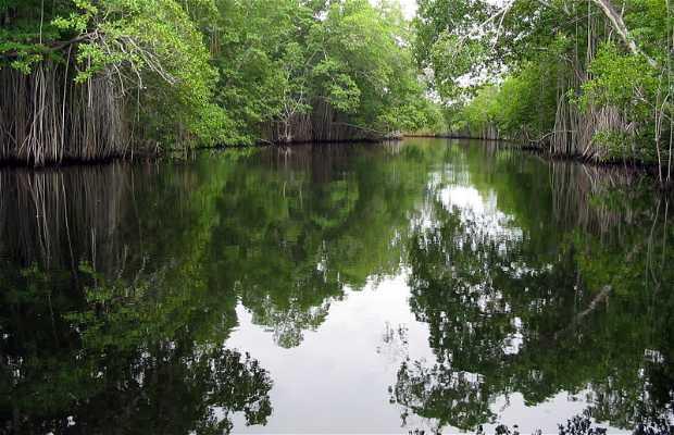 Excursión Black River