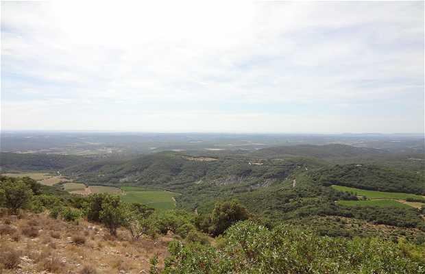 Pico Saint Loup