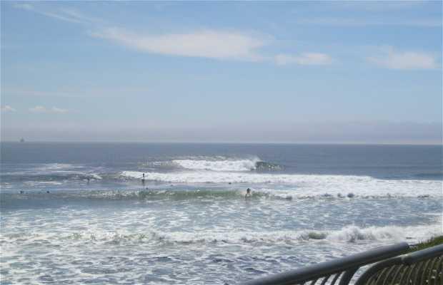 Farol de Field State Beach