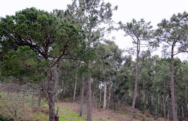 Monte de San Roque
